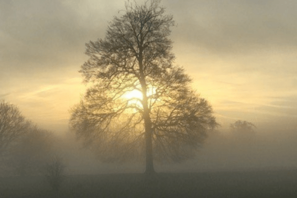 Photo of a tree in the mist and morning fog with the sign breaking through